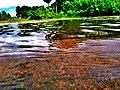 Reservoir in Sri Lanka.jpg