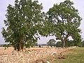 Restoration of Dry Stone Wall - geograph.org.uk - 343708.jpg
