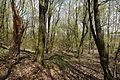 Rezerwat przyrody Skarpa Ursynowska 2017 03.jpg