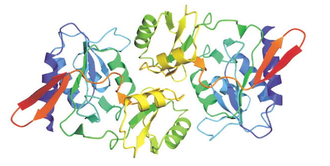 Ribose-5-phosphate isomerase - A structural diagram of the enzyme ribose-5-phosphate isomerase by Zhang, et al.