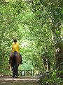 Riding in Great Ridings Wood - geograph.org.uk - 438413.jpg