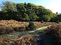 Ridley Wood - geograph.org.uk - 1544941.jpg