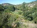 Riera de Carme, vista des del camí a la font de Vinçó.jpg