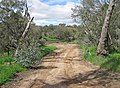 Right bank approach to ford crossing of Avon River, West Toodyay, Western Australia 2015.jpg
