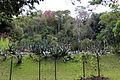 Rio de janeiro, jardim botanico, 02.JPG