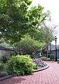 Ripley Garden in April (17427281718).jpg