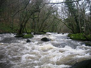 River Teign - The Teign near Fingle Bridge and Castle Drogo, with a kayaker in the background