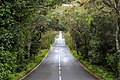 Road GM-1 in the Garajonay National Park on La Gomera, Spain (48293711206).jpg
