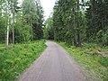 Road through forest in Haukilahti.jpg