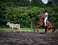 Rodeo Event Calf Roping 20.jpg