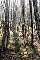 Rotes Moor, 20151101-029.jpg