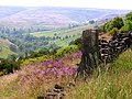Royd Edge Clough - geograph.org.uk - 195383.jpg