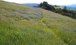 Midpeninsula Regional Open Space District - Russian Ridge Open Space Preserve.