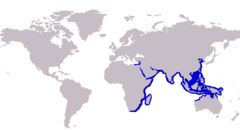 Range of the Northern whiting