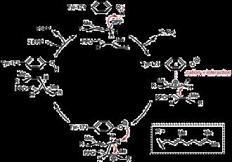 Farnesyl-diphosphate farnesyltransferase - Image: SQS Mechanism 1