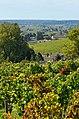 Saint-Emilion, vignoble 4.jpg