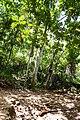 Samaná Province, Dominican Republic - panoramio (101).jpg