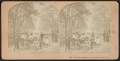Saturday afternoon, Central Park, New York, from Robert N. Dennis collection of stereoscopic views.png
