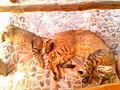 Schlafende Katzen.jpg