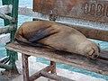 Sea Lion On Bench.jpg