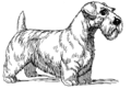Sealyham Terrier - Dog (PSF).png
