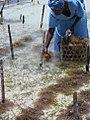 Seaweed Farmer, Zanzibar, Tanzania.jpg