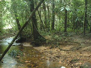 Protected areas of Sri Lanka - World Heritage Site, Sinharaja Forest Reserve is a protected area in Sri Lanka
