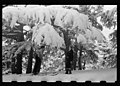 Skiers, one with camera, among Cedars of Lebanon in snow LOC matpc.22653.jpg