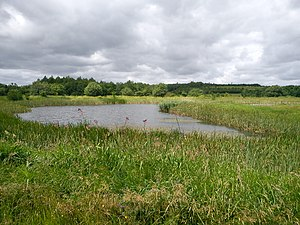 Skjoldhøjkilen - Some of the ponds in Skjoldhøjkilen are rainwater reservoirs, with an added environmental and recreational aspect.