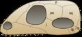 Skull synapsida 1.png