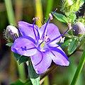 Sky Flower (4977155166).jpg