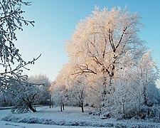 Sneeuw3.jpg
