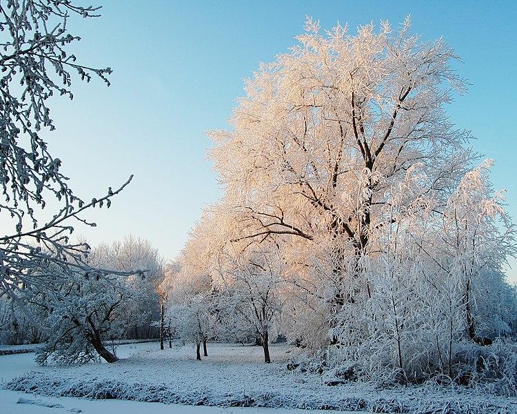 File:Sneeuw3.jpg