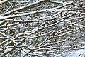 Sneeuw in Meerdaalbos - 372734 - onroerenderfgoed.jpg