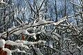 Sneeuw in Meerdaalbos - 373085 - onroerenderfgoed.jpg