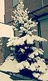Snowy day in Qeshlaq.jpg
