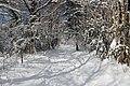 Snowy path near Thoiry - panoramio.jpg