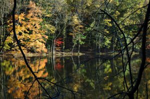 South Mountain Reservation - Foliage at Campbell Pond