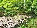 Spandau-Johannesstift - Karpfenteich (Carp Pond) - geo.hlipp.de - 37245.jpg