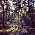 Spaziergang im Winter durch den Augustdorfer Wald.jpg