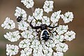Spider June 2010-1.jpg