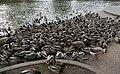 Spokane Manito Park Duck Pond 20061127.jpg