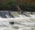 Sprotbrough weir on the River Don, South Yorkshire.jpg