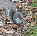 Squirrel (2876036979).jpg