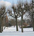 StadtparkHL01.JPG