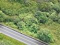 Starr-141014-2252-Caesalpinia decapetala-aerial view Hana Hwy-Kakipi Gulch Haiku-Maui (24620522843).jpg