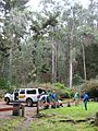 Starr 041221-1756 Eucalyptus sp..jpg