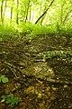Steenbergse bossen 21.jpg