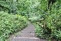 Steps to Otters Tunnel, Dibbinsdale LNR.jpg