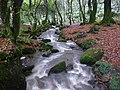 Stream in Bosahan Woods - geograph.org.uk - 1611323.jpg